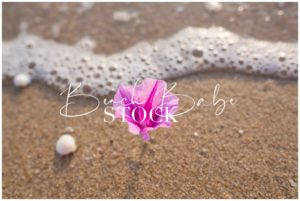 Purple flower in the sand with wave